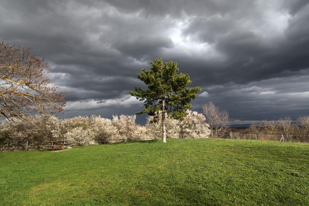 Zdjęcia: gdzieś po drodze, Francja, Idzie wiosna, FRANCJA