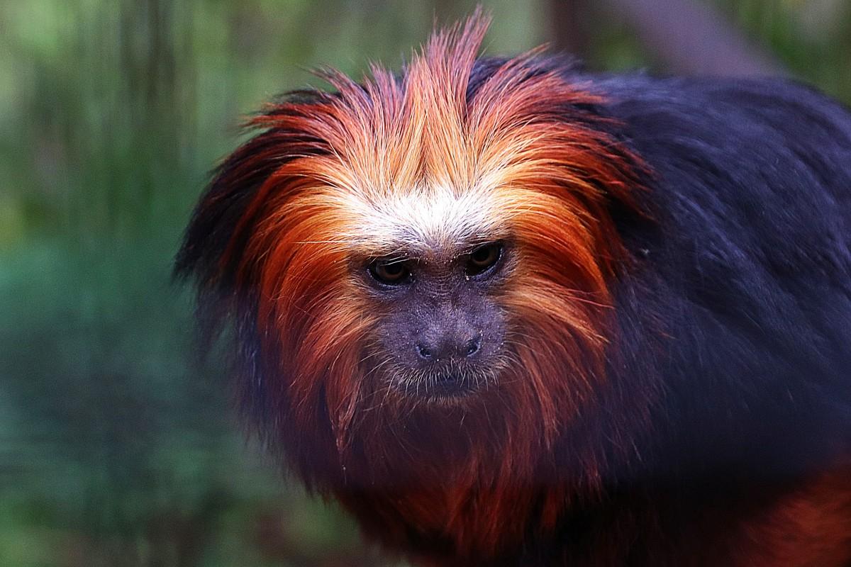 Zdjęcia: zoo , pldn zach, spojrzenie , FRANCJA