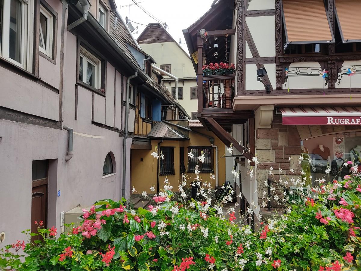 Zdjęcia: Obernai, Alzacja, ulica , FRANCJA