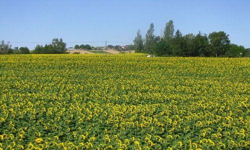 FRANCJA / Aragonia / Carcassonne - Tuluza / gaskońskie uprawy
