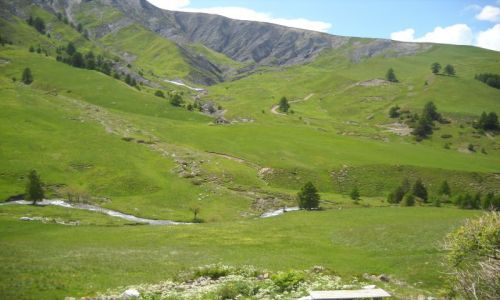 Zdjecie FRANCJA / Alpy / Col de la Bonette / Zieloność