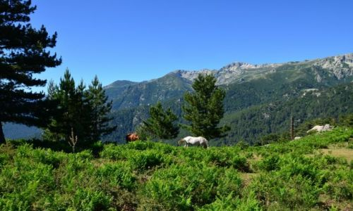 FRANCJA / Korsyka / Vizzavona-Capanelle / Na szlaku_9_4