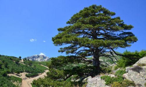 FRANCJA / Korsyka / Vizzavona-Capanelle / FRA LI MONTI czyli Droga Przez Góry dzień 9