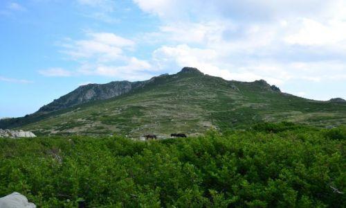 FRANCJA / Korsyka / Capanelle-Prati / Na szlaku_10_9