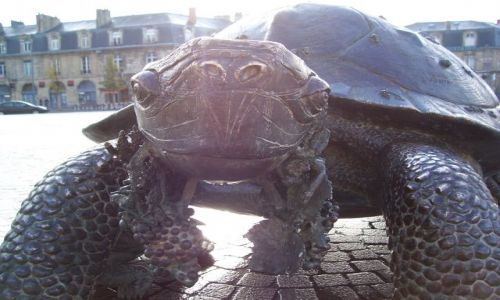 Zdjecie FRANCJA / Akwitania / Bordeaux / Place de la Victoire / Żółwie spojrzenie