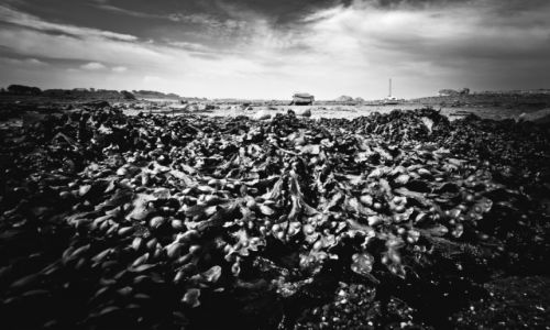Zdjęcie FRANCJA / Bretania / Cote de Granit Rose / Odpływ