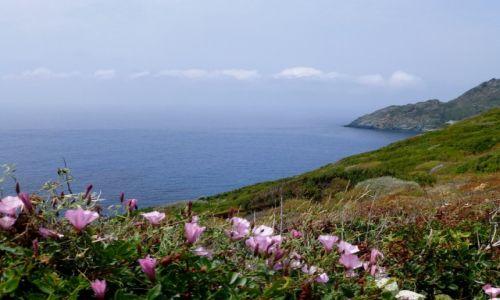Zdjęcie FRANCJA / Korsyka / zachodnie wybrzeże / jadąc zachodnim wybrzeżem Korsyki