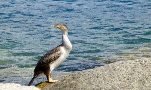 Zdjecie FRANCJA / Korsyka / Calvi / spotkany na nabrzeżu portowym w Calvi