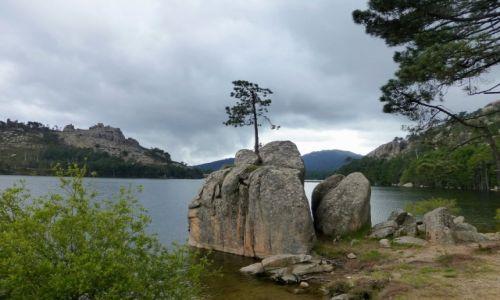 Zdjecie FRANCJA / Korsyka / La Ospendale / wyrosła na kamieniu...