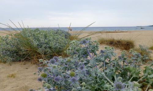 Zdj�cie FRANCJA / Korsyka / Zatoka de Liscia / pla�a nad Zatok� de Liscia
