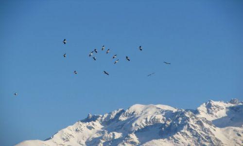 Zdjecie FRANCJA / Rodan-Alpy / Grenoble / zabłąkane styczniowe boćki