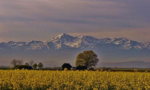 Zdjęcie FRANCJA / Midi-Pyrénées / Tarbes / Pireneje