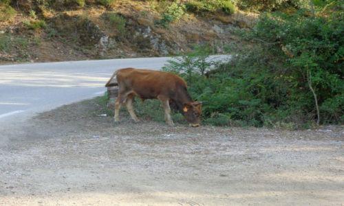 Zdjecie FRANCJA / Korsyka. / Na szlaku korsykańskim. / Rowerem na Korsyce.