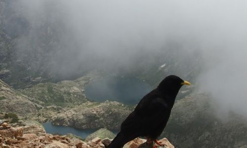 Zdjęcie FRANCJA / Korsyka / szlak GR20 / Korsyka GR20