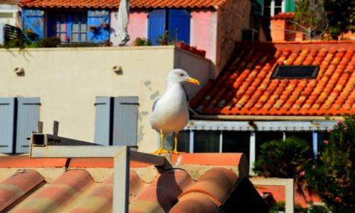 Zdjęcie FRANCJA / Prowansja / Marsylia / Kolorowa Marsylia