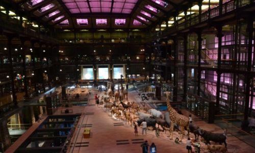 Zdjecie FRANCJA / Ile-de-France / Paryż / Paryż - Muzeum Historii Naturalnej