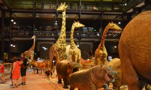 FRANCJA / Ile-de-France / Paryż / Paryż - Muzeum Historii Naturalnej