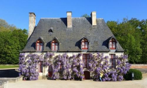 Zdjęcie FRANCJA / Dolina Loary / Château de Chenonceau / Glicynia