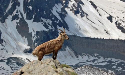 Zdjecie FRANCJA / Alpy Graickie - masyw Mont Blanc / Lodowiec Bionnassay / Na straży lodowca