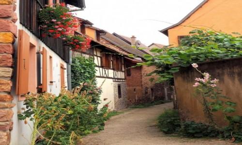 Zdjęcie FRANCJA / Azacja / Eguisheim, Route des Vins / chciałoby się zostać...