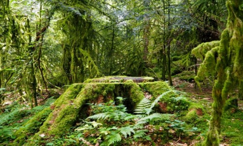 Zdjęcie FRANCJA / Lotaryngia / Gerardmer / w gąszczu leśnej zieleni...