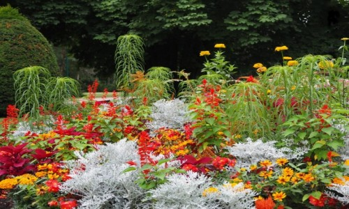 Zdjęcie FRANCJA / Lotarygia / Nancy, Parc de la Pepiniere / parterre de fleurs...