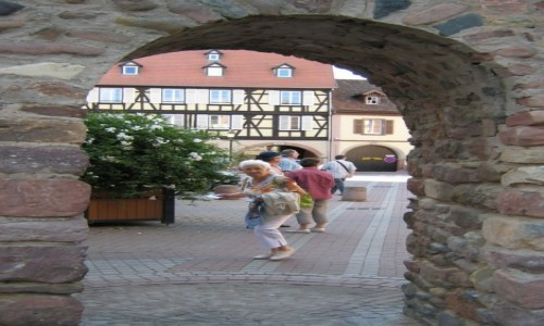 Zdjęcie FRANCJA / Alzacja / Gdzieś w Alzacji / A kuku