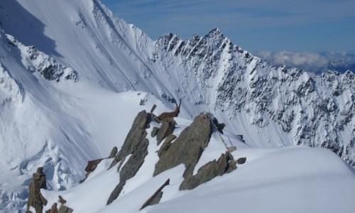 Zdjęcie FRANCJA / alpy / tete rose / Alpy