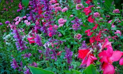 Zdjecie FRANCJA / Lotaryngia / Nancy-Jardin Dominique Alexandre Godron / w ogrodzie Dominique...