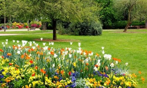 Zdjęcie FRANCJA / Lotaryngia / Nancy, Parc de la Pepiniere / zanim zakwitną róże...