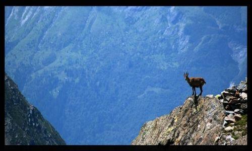 Zdjecie FRANCJA / Alpy Graickie / Masyw Mont Blanc / Wolność