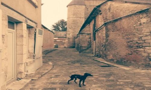 Zdjecie FRANCJA / ogólny / Saint Junien / Francuska architektura większości małych miasteczek