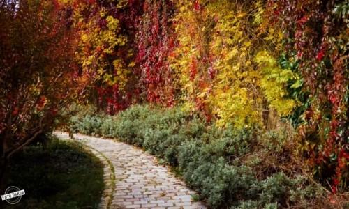Zdjecie FRANCJA / - / Parc de Belleville, Paryż / Parc de Belleville