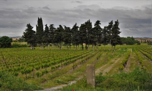 Zdjęcie FRANCJA / Oksytania / Narbonne / Narbonne, mała winnica