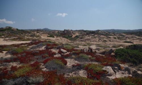 Zdjecie FRANCJA / Korsyka / Bliżej nieokreślone południowe wybrzeże / Niecodzienne krajobrazy Korsyki