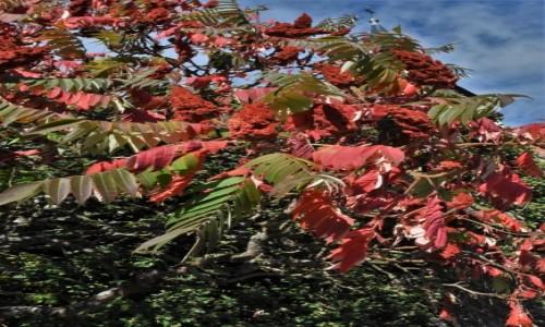 Zdjęcie FRANCJA / Alzacja / Lauterbourg / Lauterbourg, zakamarki, jesień
