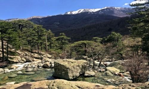 Zdjecie FRANCJA / Korsyka / Korsyka / foto=3