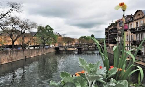 FRANCJA / Lotaryngia /  Metz / zawsze w kwiatach_ _