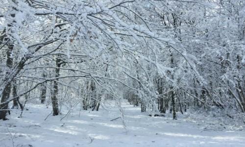 Zdjęcie FRANCJA / Lotaryngia / Thionville / otulone białym puchem...