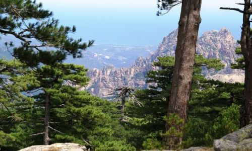 Zdjecie FRANCJA / Korsyka / Col de Bavella / Foret de Bavell