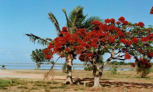 Zdjęcie FRANCJA / Nowa Kaledonia / plaża / plaża