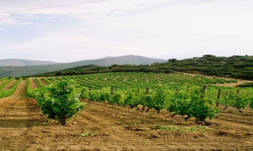 FRANCJA / Korsyka / Patrimonio / Korsyka - winnice Patrimonio