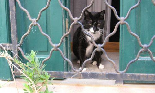 Zdjecie FRANCJA / Langwedocja / Saint Genis des Fontaines / Le chat