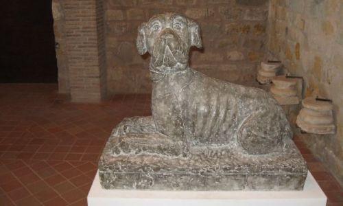 Zdjecie FRANCJA / Langwedocja / Carcassonne(kamienny mieszkaniec zamku) / Piesek:)