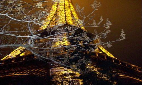Zdjecie FRANCJA / paryz / eifel tower / Eifel tower