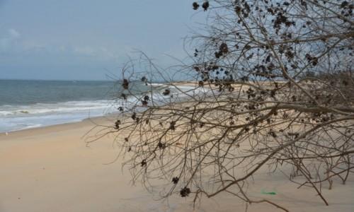 GABON / Estuaire / Park Narodowy Pongara / Plaża żółwi