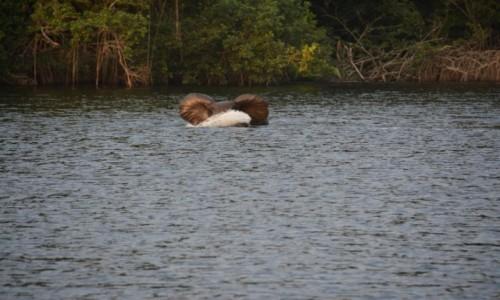 GABON / Estuaire / Park Narodowy Pongara / Po upalnym dniu