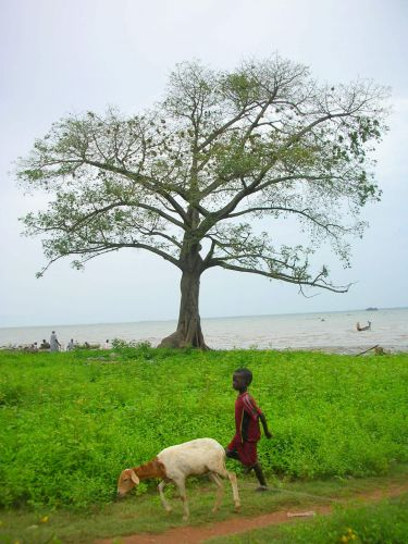 Zdjęcia: Albreda, chlopiec z koza, GAMBIA