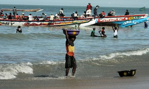 Zdjecie GAMBIA / - / okolica Bandżul / połów ryb