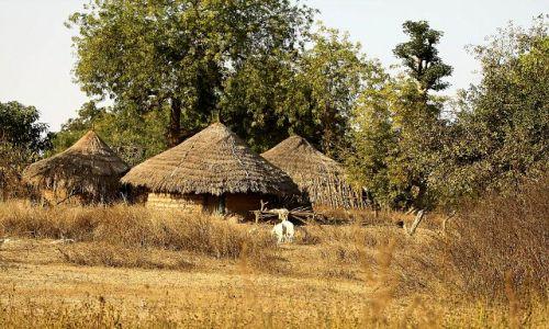 Zdjęcie GAMBIA / - / Gambia / wioska w Gambii